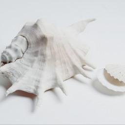 seafoam photography