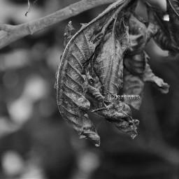 photography winter blackandwhite india nature