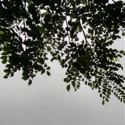 tree photography interesting