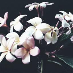 crispeffect flower