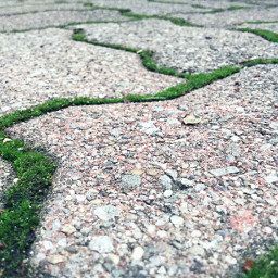 crispeffect moss stone closeup green