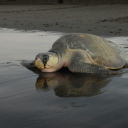 costarica puravia beach photography love pchappiness freetoedit