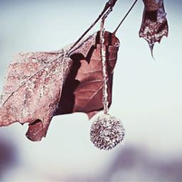 winter art leaf wintertime winterlove