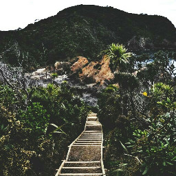 stairs nature plants beach dramaeffect