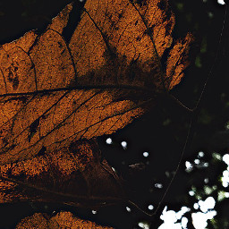 leaves leaveslovers naturelovers