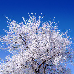 photography nature winter snow frost