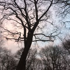 noedit monday uni nature sky