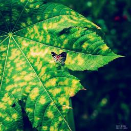 nature photography winter beautiful butterfly