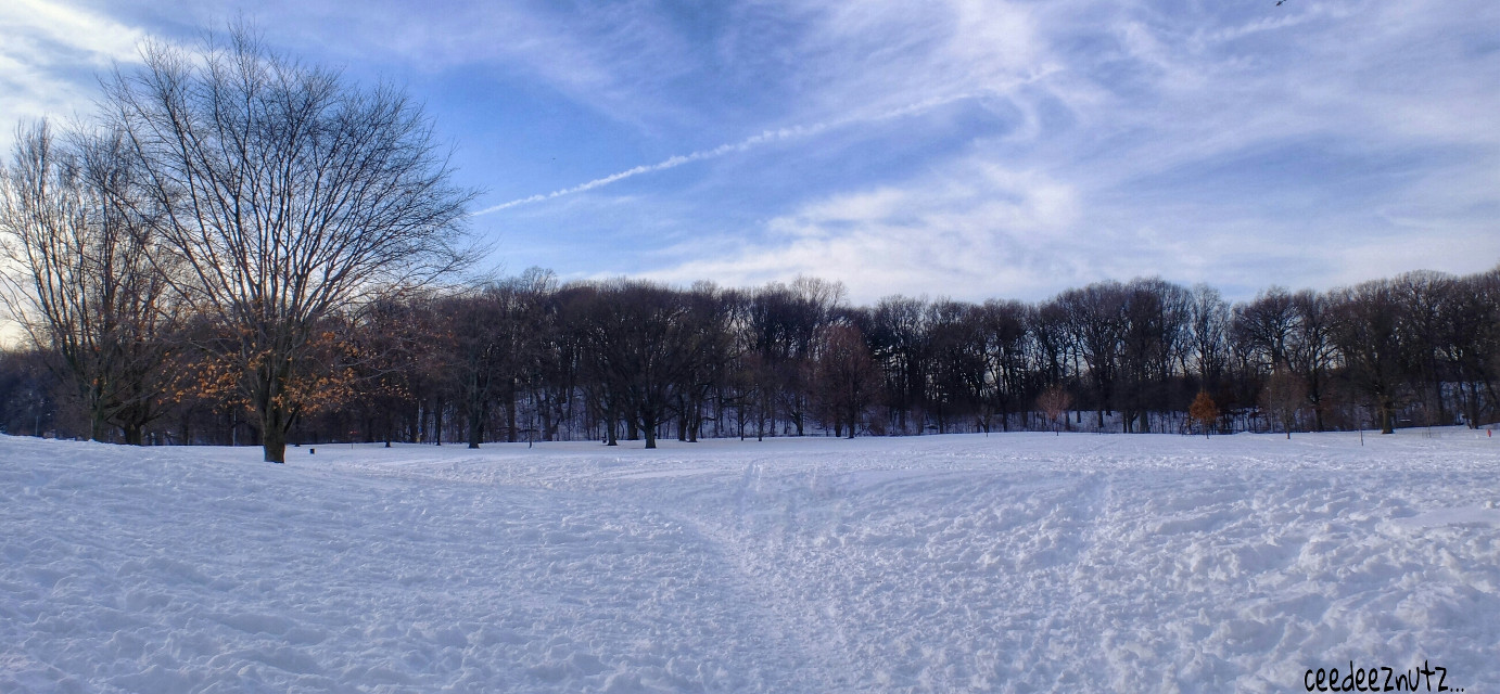 To sweet Gaynor @sunsetschnubb  All of this room for you and the pooch to run around and enjoy. #nature #photography #snow #winter #Bklyn