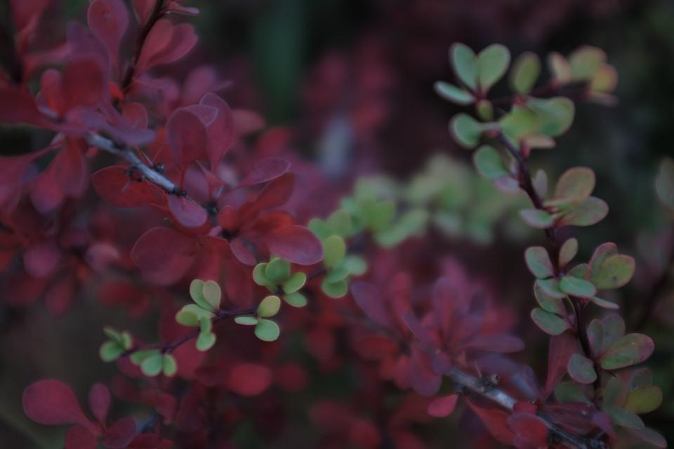 #freetoedit  #colorful  #leaves #nature #beautiful