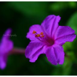 nature flower colorful colorsplash