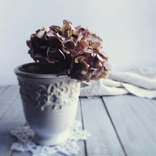 #stillness  #freetoedit #bokeh #love #photography #retro #oldphoto #flower #nature #hydrangea