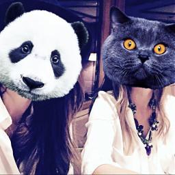animalface partyanimals pandaface catface friends