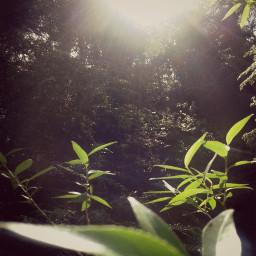 nature light heaven