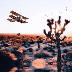 sunset putaplaneonit desert cactus warmcolors