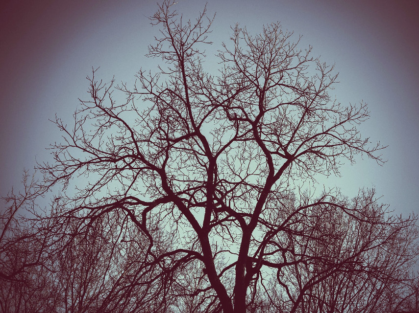 A Small Token Of My Regard For You... #WPPNatureHearts #vintageeffect  #nature  #tree  #heart #cute  #winter  #pretty  #dusk  #kansascity  #photography  #artistic