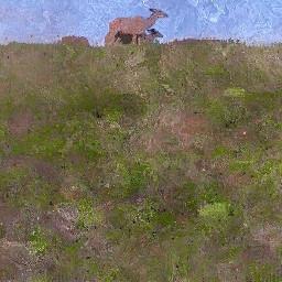 buck wildlife southafrica grasslands myphotography