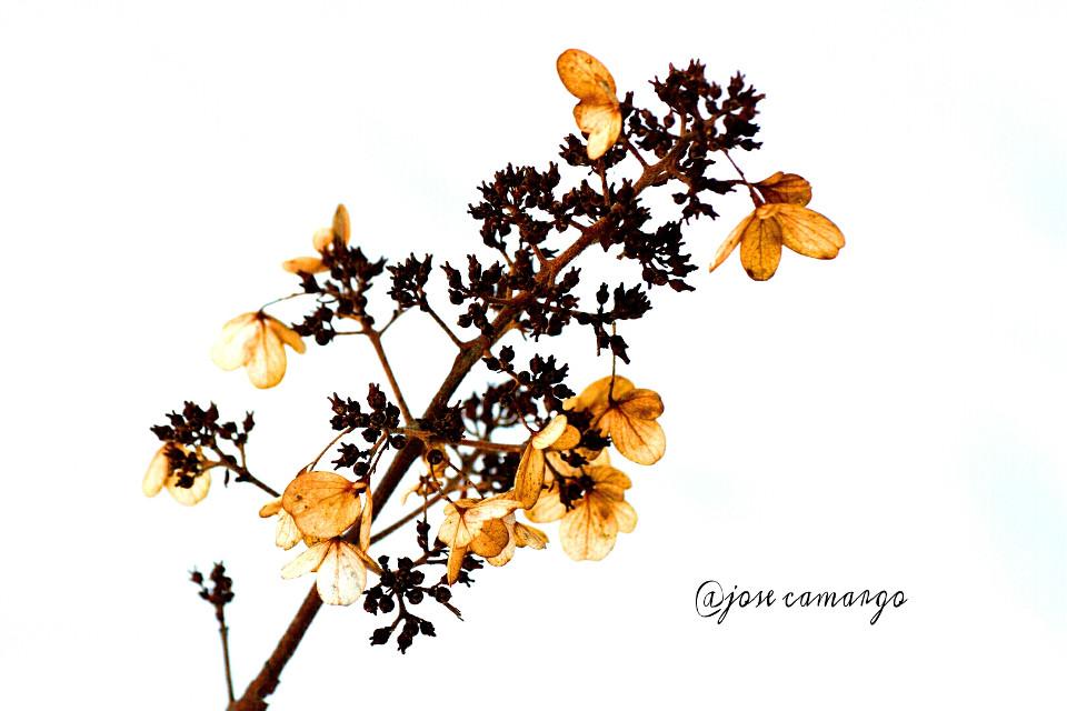 #colorful #nature #photography #winter #love  #emotion #seasons #nikon
