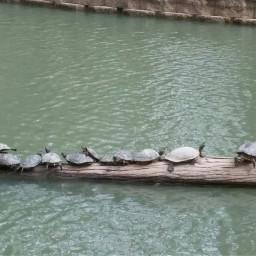 mypet lakestory mercer pond