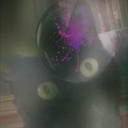 mypet django cat photography blureffet