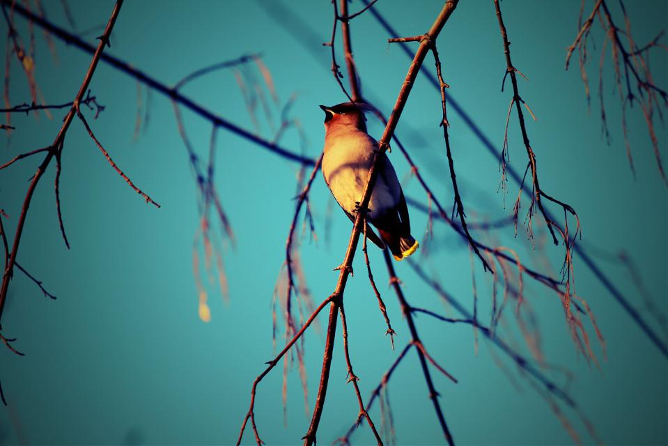 #photography #nature #bird