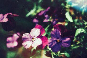interesting art nature photography flowers freetoedit