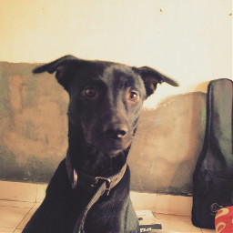 mypet doglove pet doggy