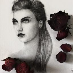 drawing art fashion pencilart roses