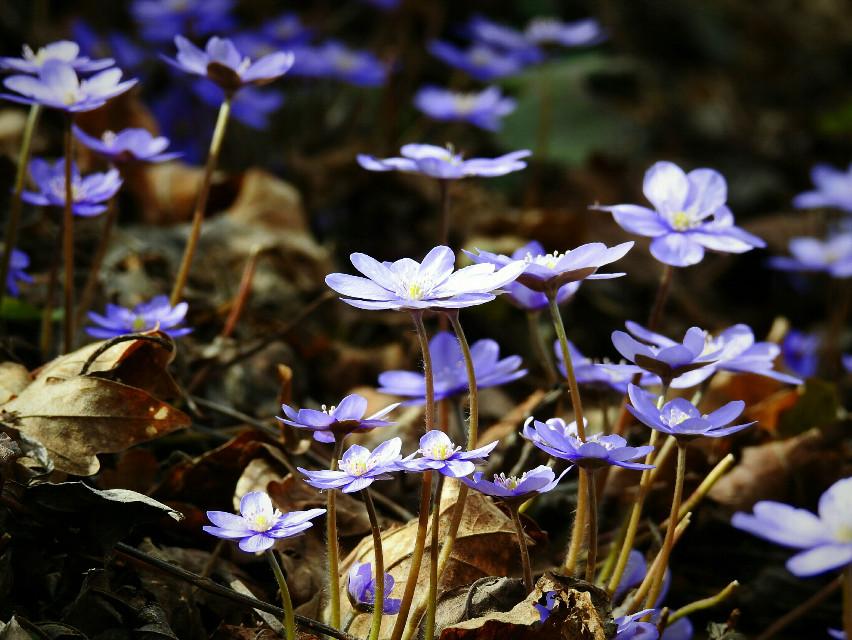 #wildflower  #nature