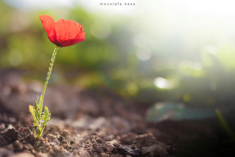 #flower  #nature #bokeh #lightmask