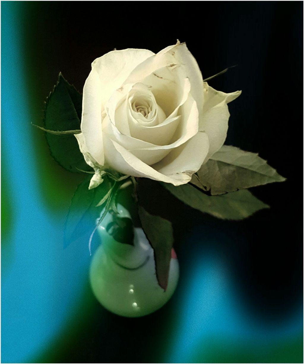 #flower #rose #lightmask