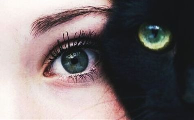 photography cute cat eyes
