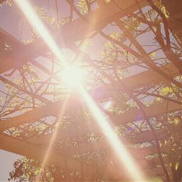 sunnyeffect sunnyday sunny nature park
