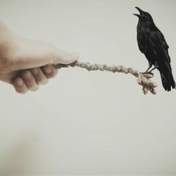 raven black hand freetoedit