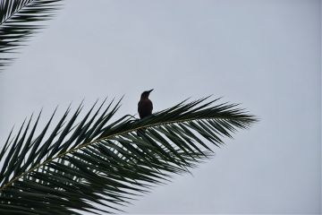 palmtrees bird