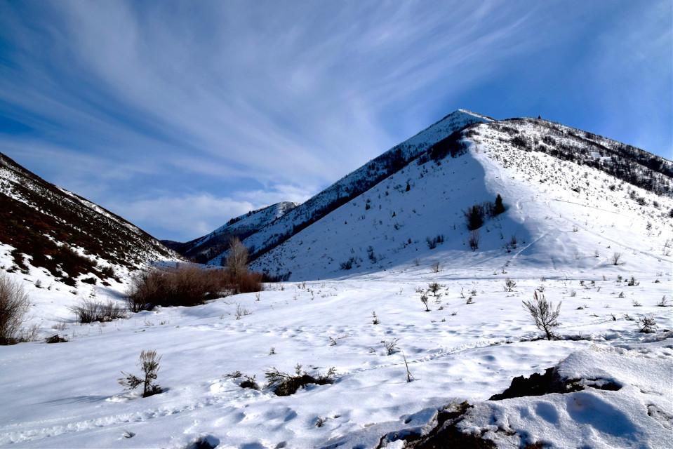 Feathered   #landscape#nature#landscape#freetoedit#snow#winter