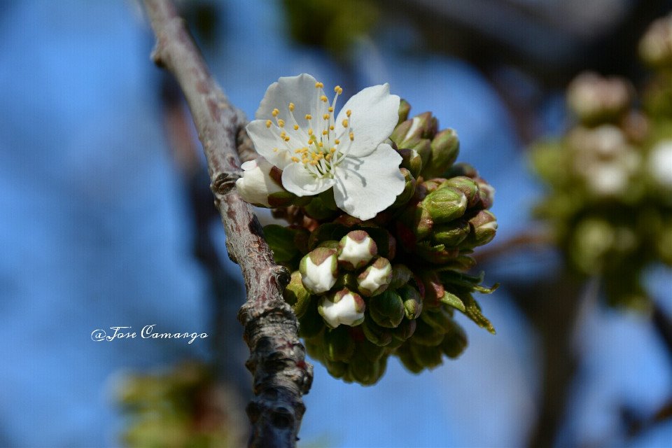 #colorful #flower #nature #spring #nikon #emotion #seasons #blossom