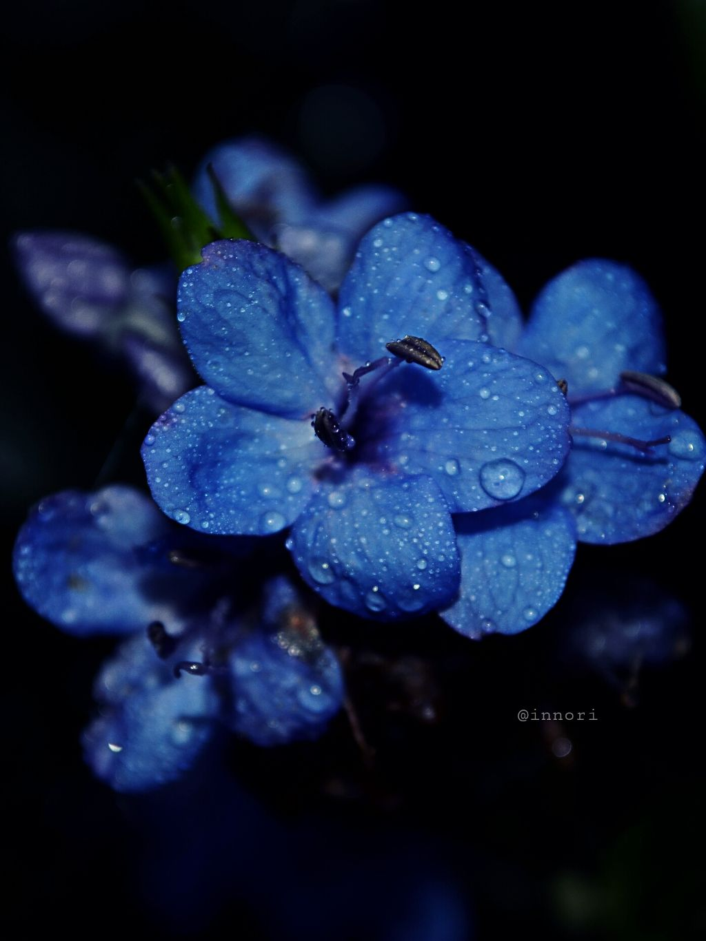 #nature #flower #photography #blue _keep reading 😉