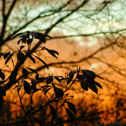 freetoedit brightbackground sunset trees leaves wppnature
