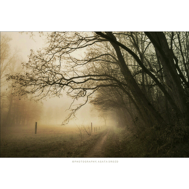 #emotions #nature #love  #photography  #trees  #mist  #landscape #lovetrees #lovenature