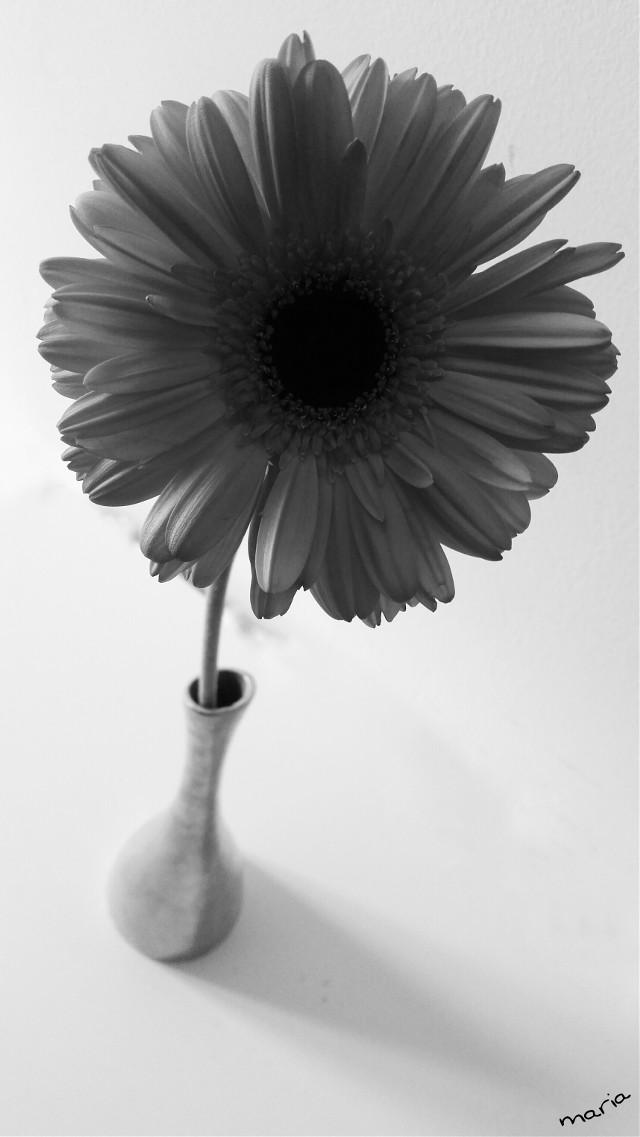gerberas my favourite flower  #photography #blackandwhite #emotions