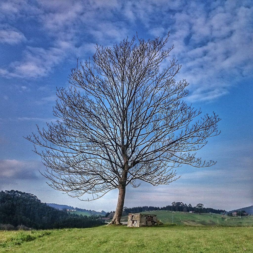 #asturias #freetoedit #hdr #photography #spring #nature