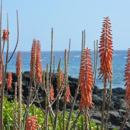 wppsunnyday orange kauai