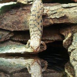 lizard reptile petsandanimals nature photography