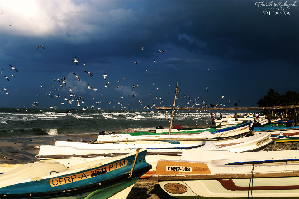 #boats #nature #photography #beach #travel #canonphotography #canon6d #srilanka #charithkodagodaphotography #rough #beautiful #sea #clouds #darksky #sea birds