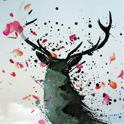 animalshapemask collage deer photooverlay unsplash freetoedit