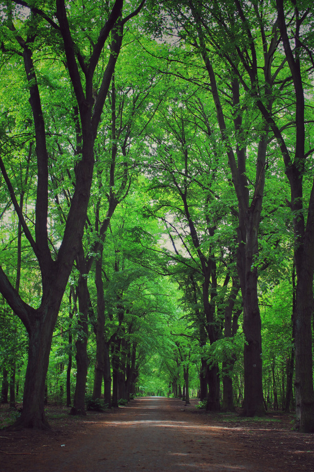 #nature #forest #trees #green