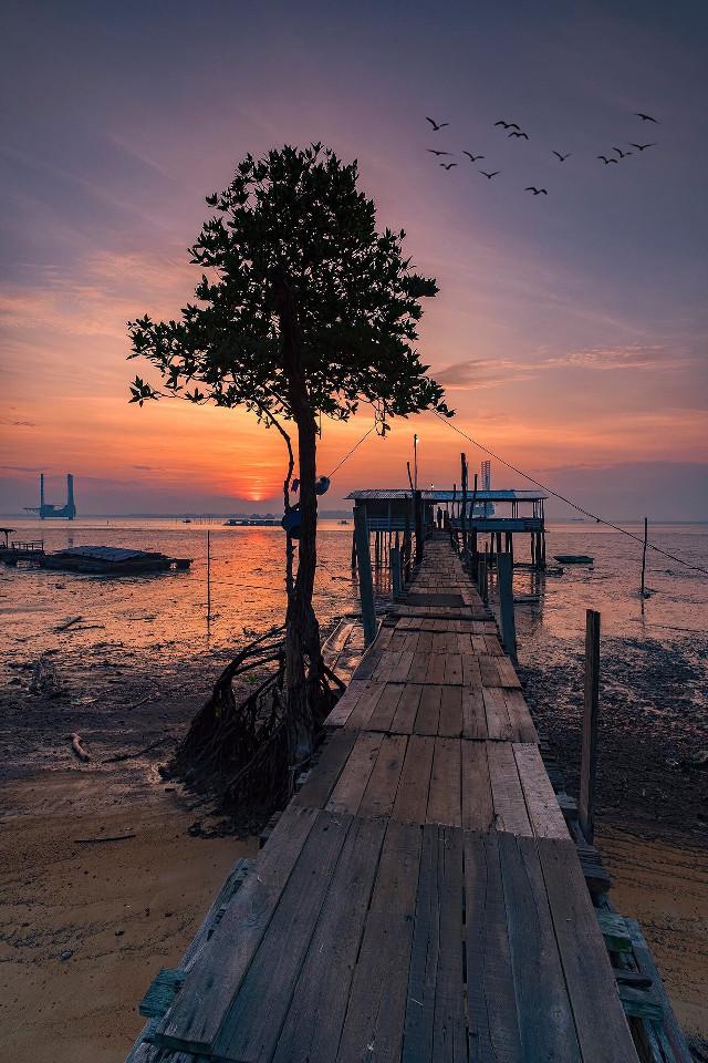 Breaking Day #sunrise #sun #lowtide #tree #morning #skyline #colorful #picsart #landscapephotography #photography #photooftheday