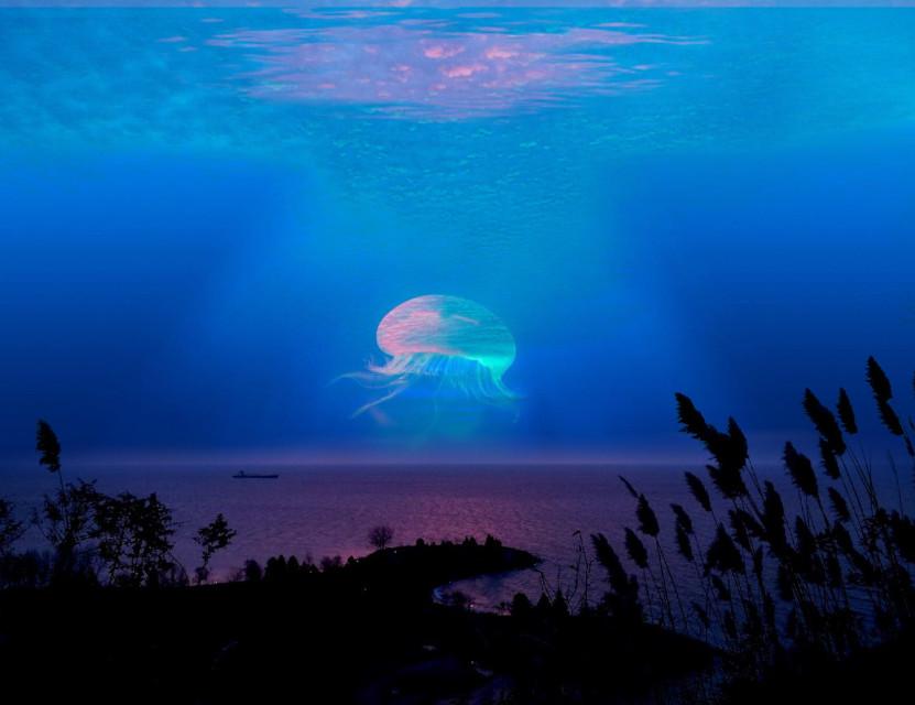 #jellyfish #interesting #sea #beach #edited