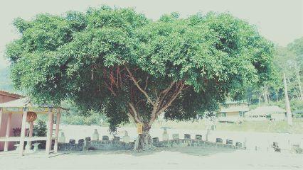 wish hope tree trip redstring